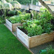 VG.+Vegetable+Garden