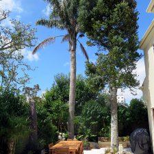 courtyard-epsom-garden-(2)