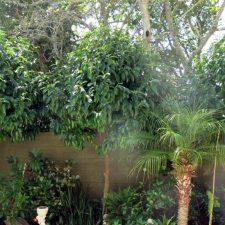 courtyard-epsom-garden-(4)