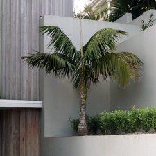 landscape-parnell-apartments-(5)