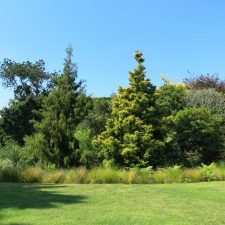 native-planting-st-heliers-(3)