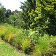 native-planting-st-heliers-(4)