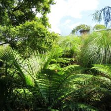 native-planting-st-heliers-(5)