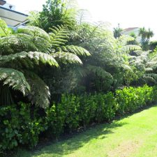 native-planting-st-heliers-(7)