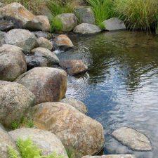 native-planting-wetland-pond-(1)