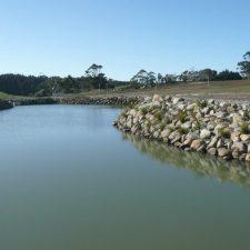 native-planting-wetland-pond-(4)
