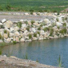 native-planting-wetland-pond-(5)