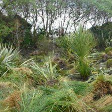 stormwater-wetland-landscape-(2)