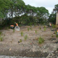 stormwater-wetland-landscape-(6)